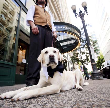 The Future of Hospitality Pet Target Group