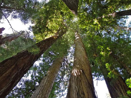 Top National Park Redwoods