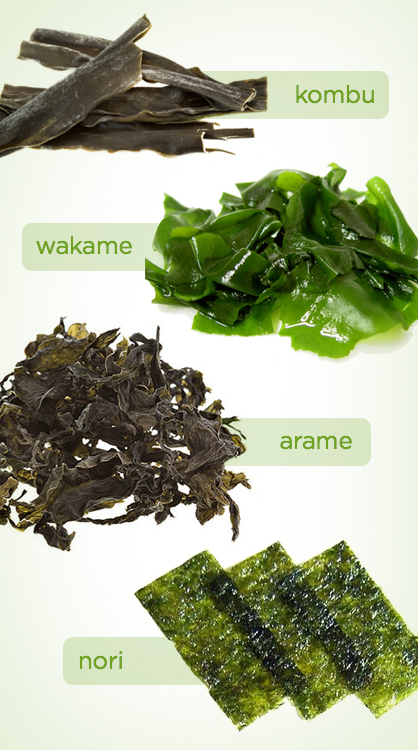 Types of Sea Vegetables
