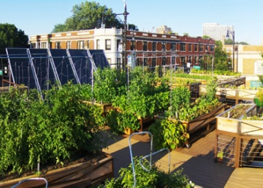 Green Living: Rooftop Farms the New Trend?
