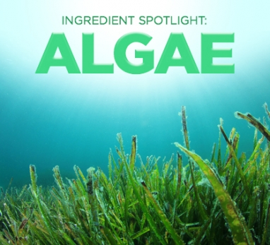 Beauty Ingredient Spotlight: Algae