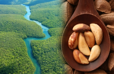 Protect Amazon Rain Forest, Eat Brazil Nuts for a Snack