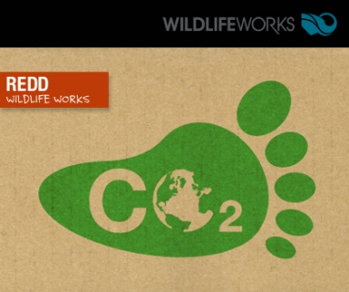 Wildlife Works launches carbon offset campaign to save forests