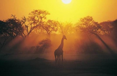 JET SET:  Venture on African Luxury Expedition Guided Tours