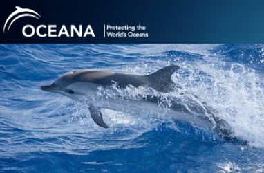Help save the dolphins with Oceana