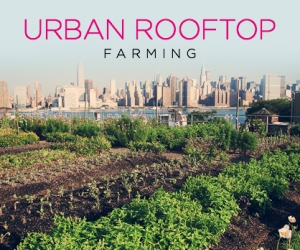 Eco-Friendly Farms In The Sky