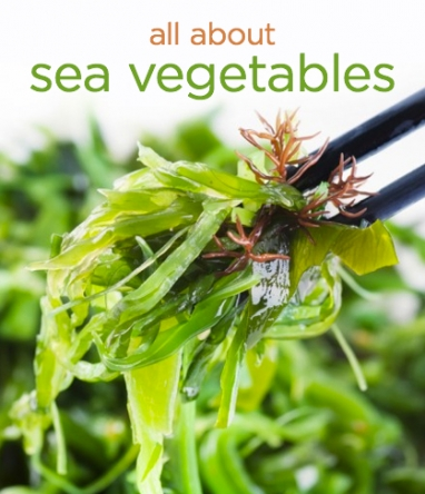 Wellness Wednesday: All About Sea Vegetables