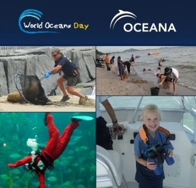 LUX Giving: Celebrating World Oceans Day, officially June 8